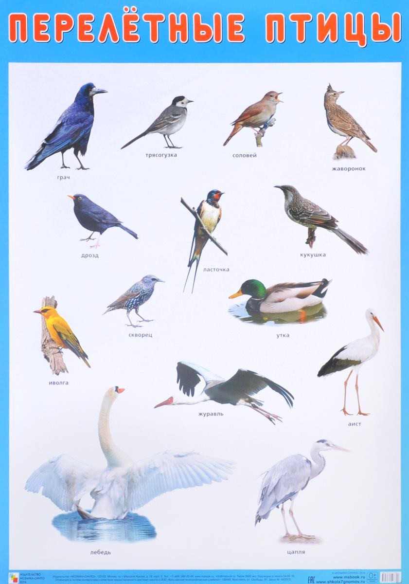 справочник в картинках птицы неудивительно оставил истории
